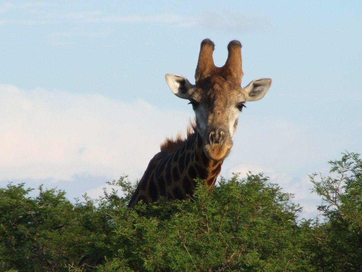 Curious about #KwaZuluNatal & #SouthAfrica. #Safari #MondayMotivation #Giraffe #RoadTrip https://t.co/HMYvstdyko