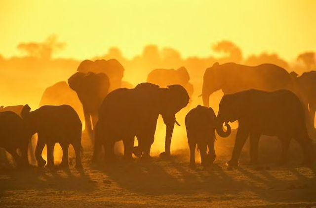 17 unforgettable African safaris https://t.co/RkTC843MRo @NatGeoTravel #African #Safari https://t.co/mFcmAVRwhc