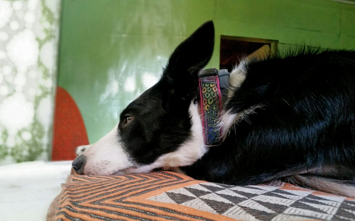 ''No one appreciates the very special genius of your conversation as a dog does.'' Christopher Morley #mydog #BestFriend #bordercollie #lovemydog