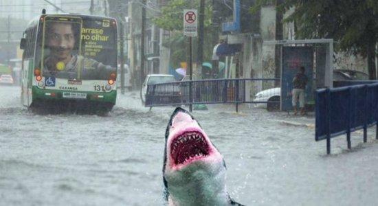 APAC protagoniza memes por novos acertos na previsão de chuva