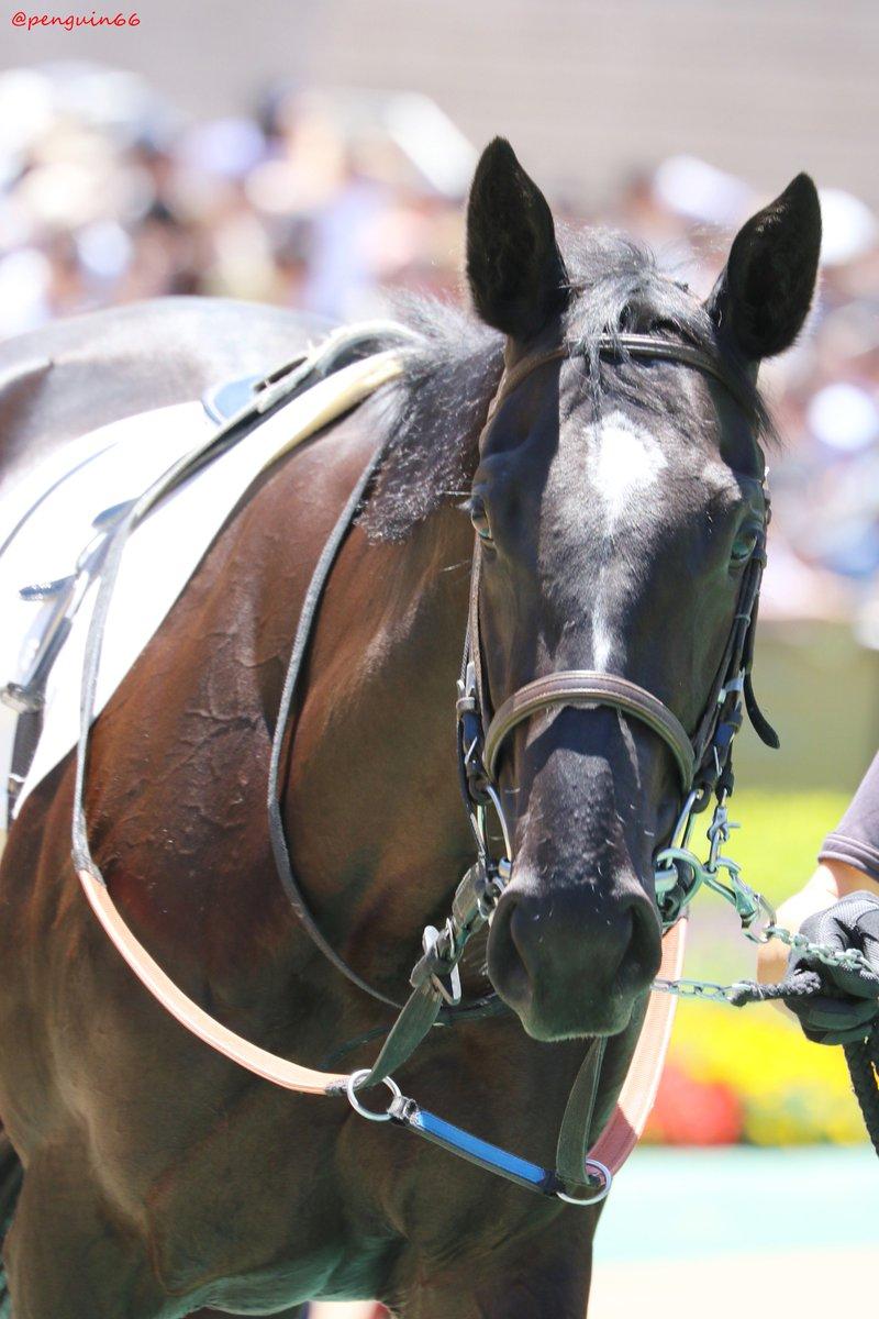 20190616東京6R   新馬戦 1ヨシノパナギア エスケンデレヤのお嬢さん、お母さんはエーシンパナギアさんです  #ヨシノパナギア #keiba