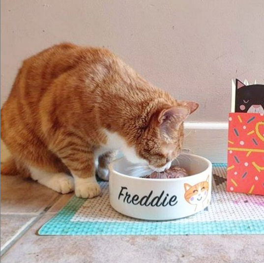 o @fredfred_cat celebrated his birthday with a lovely cat bowl from our website  You just can't beat birthday tea in style  @fredfred_cat *  Cat bowl by @hoobynoo * #catbowl #catbowls #catsbirthday #catoftheday #catagram_daily #catgrams #catgramers #catsofinstagrampic.twitter.com/NLOkXD1l85