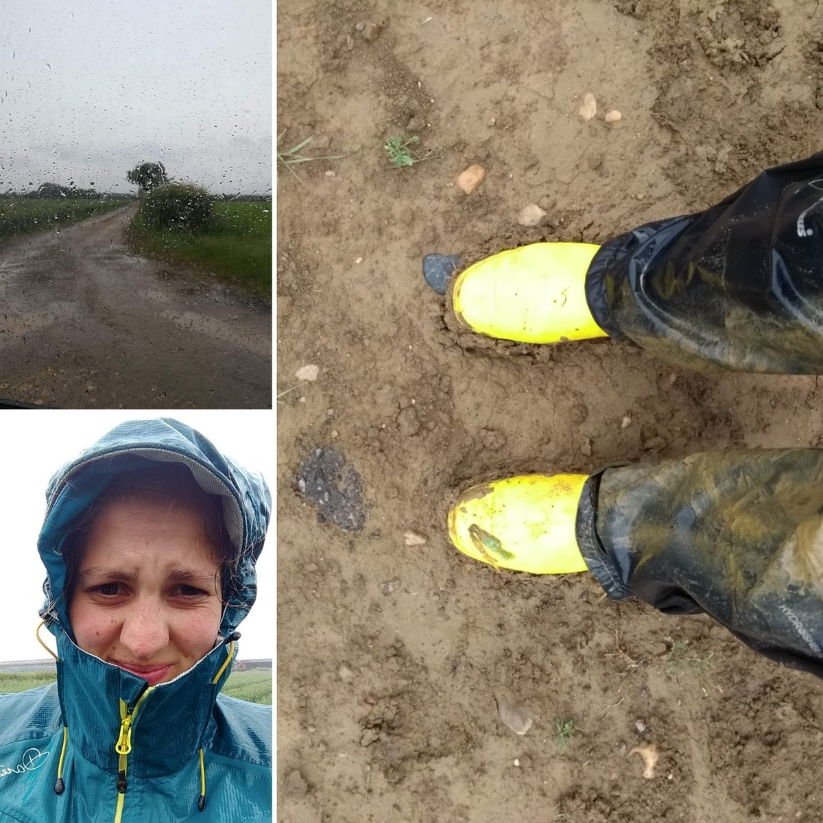 Photo summary of last week's field work. Hoping for less rain now I'm in Aberdeenshire but either way the #aphid hunt continues 👩‍🌾 https://t.co/ril1uN7Bqd