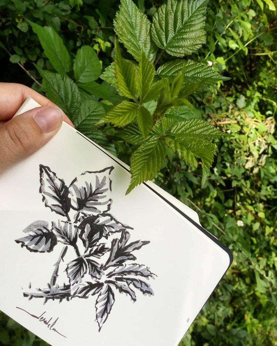 Leaves 🍃 #dailyart #dailyillustration #trees #nature #leaf #leaves #blackandwhitedrawing #outdoorsketch https://t.co/BdRUY9aj8P