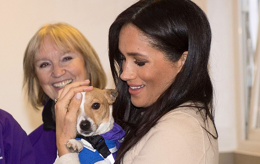 """Duchess Meghan has written the foreword for @themayhew's annual review:  """"As a proud rescue dog owner, I know from personal experience the joy that adopting an animal into your home can bring..."""" <br>http://pic.twitter.com/dMykJhOLTw"""