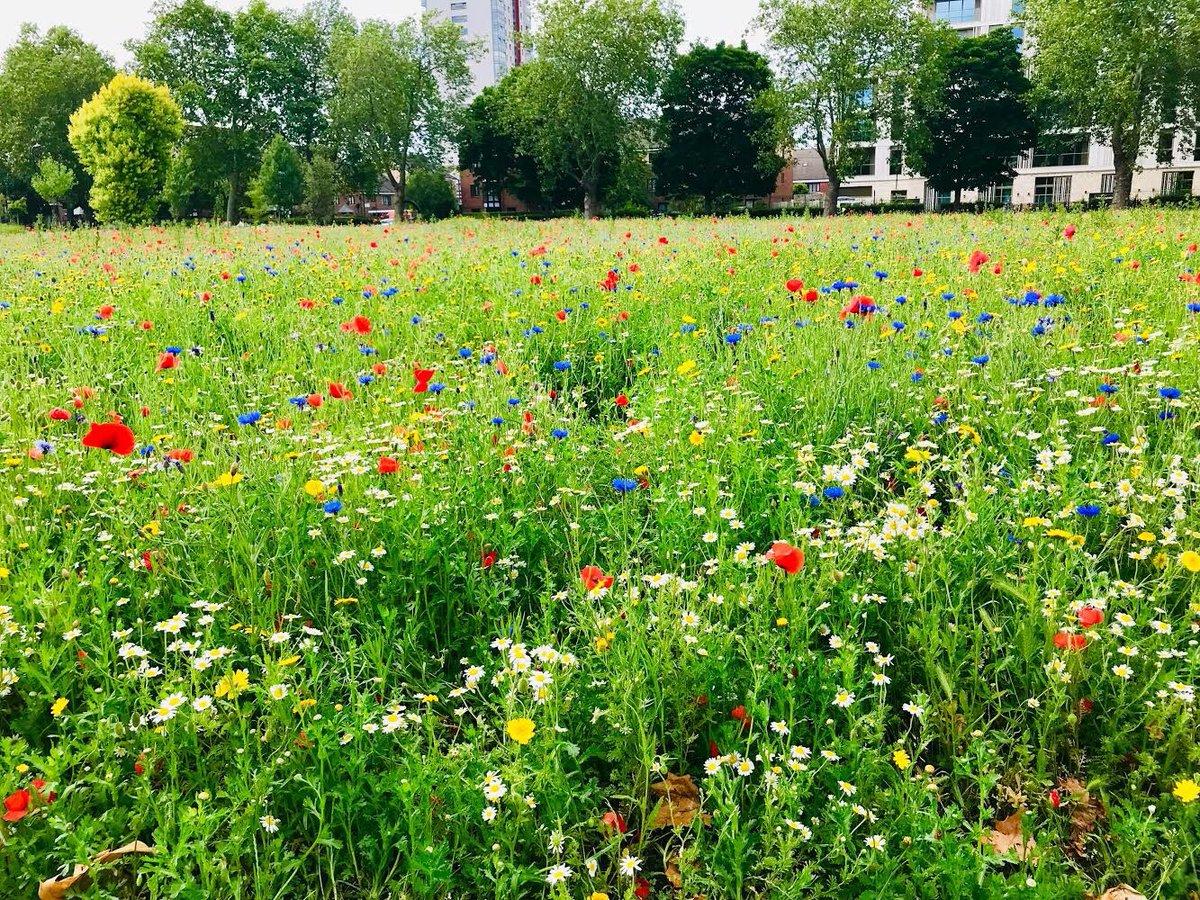 My local park in Hackney today!