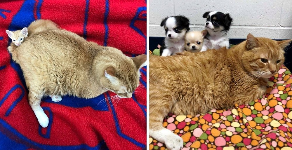 Stray cat became a vet nurse and has been helping animals in need every day for 2 years. See full story and video: lovemeow.com/cat-street-hel…