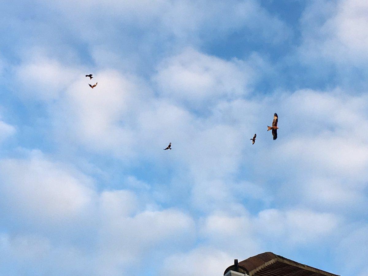 Red Kites #30DaysWild @30DaysWild @BBOWT @Natures_Voice