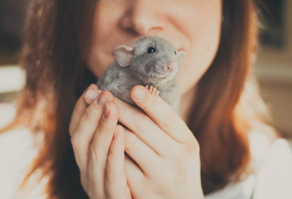 Мышка девушка картинки