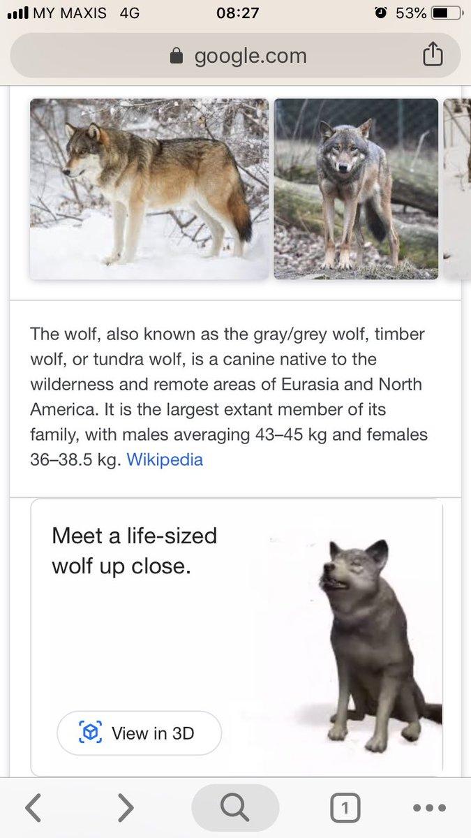 เพิ่งรู้ว่า search google ชื่อสัตว์เดี๋ยวนี้ บางตัวจะมี AR ให้เราเล่น เพื่อดูขนาดจริงของสัตว์นั้นๆได้