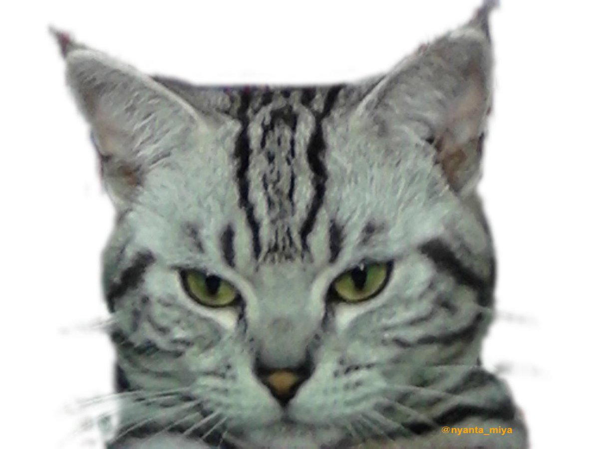 #Cat #Chat #Gatos #Gatto #Kucing #кот