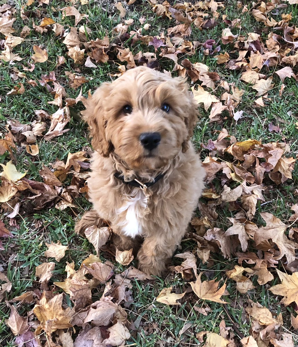 Dudley, soon to visit LPS and to be trained as a companion dog to support the emotional wellbeing of our students. <br>http://pic.twitter.com/aUv47M8p41