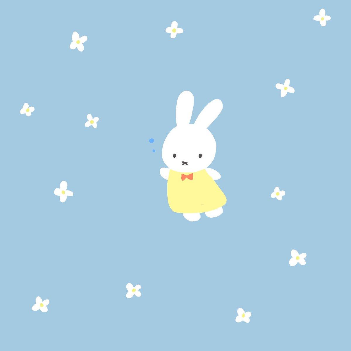 Haruka Miffy Usakich Twitter