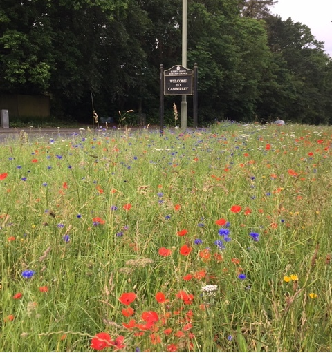 We've planted trial wildflower verges across Surrey Heath - the strip near #Camberley fire station is really starting to bloom now 🌸🌼🌺 🤞local wildlife are appreciating the longer grass & flowers 🦋🐝🐞  We're monitoring these areas with the aim of extending the scheme 👍
