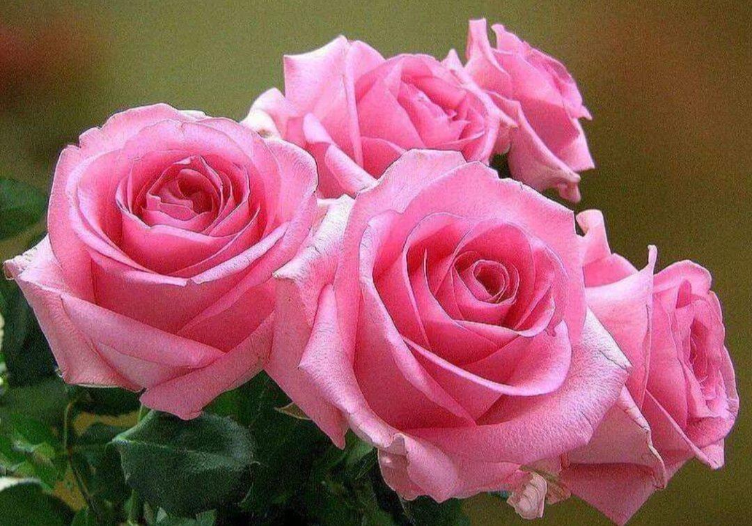 Анимашки красивые цветы и пожелания