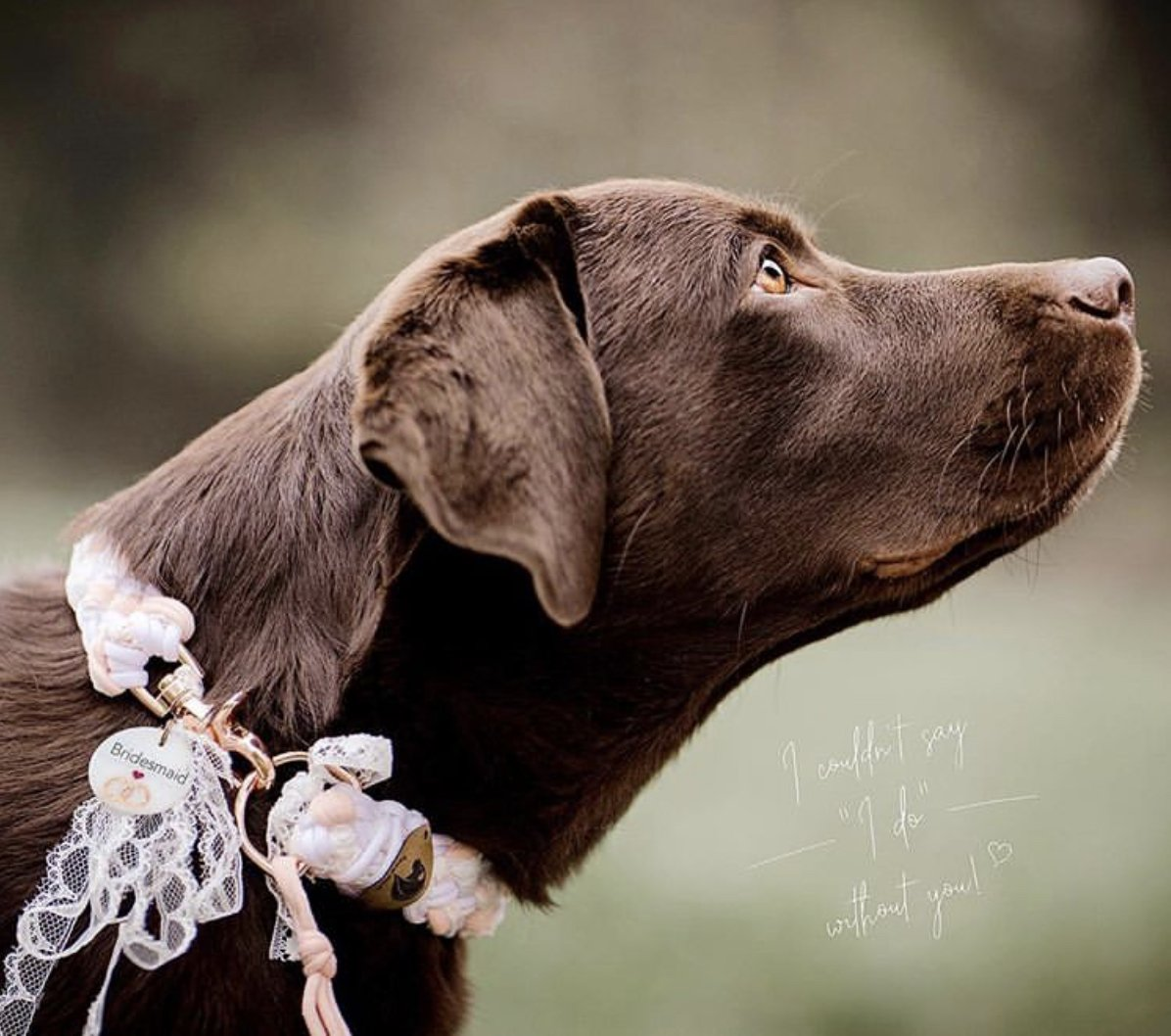"I couldn't say ""I do"" without you ❤️🐶🐾  📸: @chocolatelab_bailey     #Rosewoodpet #Rosewooddog #chocolatelab #beautiful #bridespup #dogsatweddings #ido #love #fur-everafter #puppylove #puppies #dogsofinstagram"