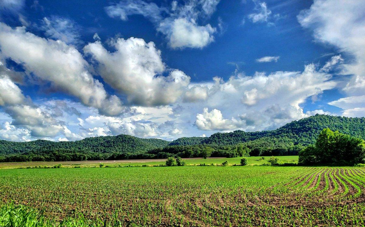 A soybean field in Estill County, Kentucky, by @kentuckygirl_UK<br>http://pic.twitter.com/7gPOpbq6Dp