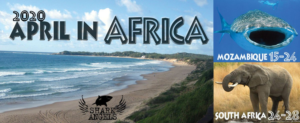 We're going to Africa!!! Mozambique with an add-on safari to South Africa. Join Us. #manta #whaleshark   http://sharkangels.org/shark-diving/diving-adventures-with-the-angels …