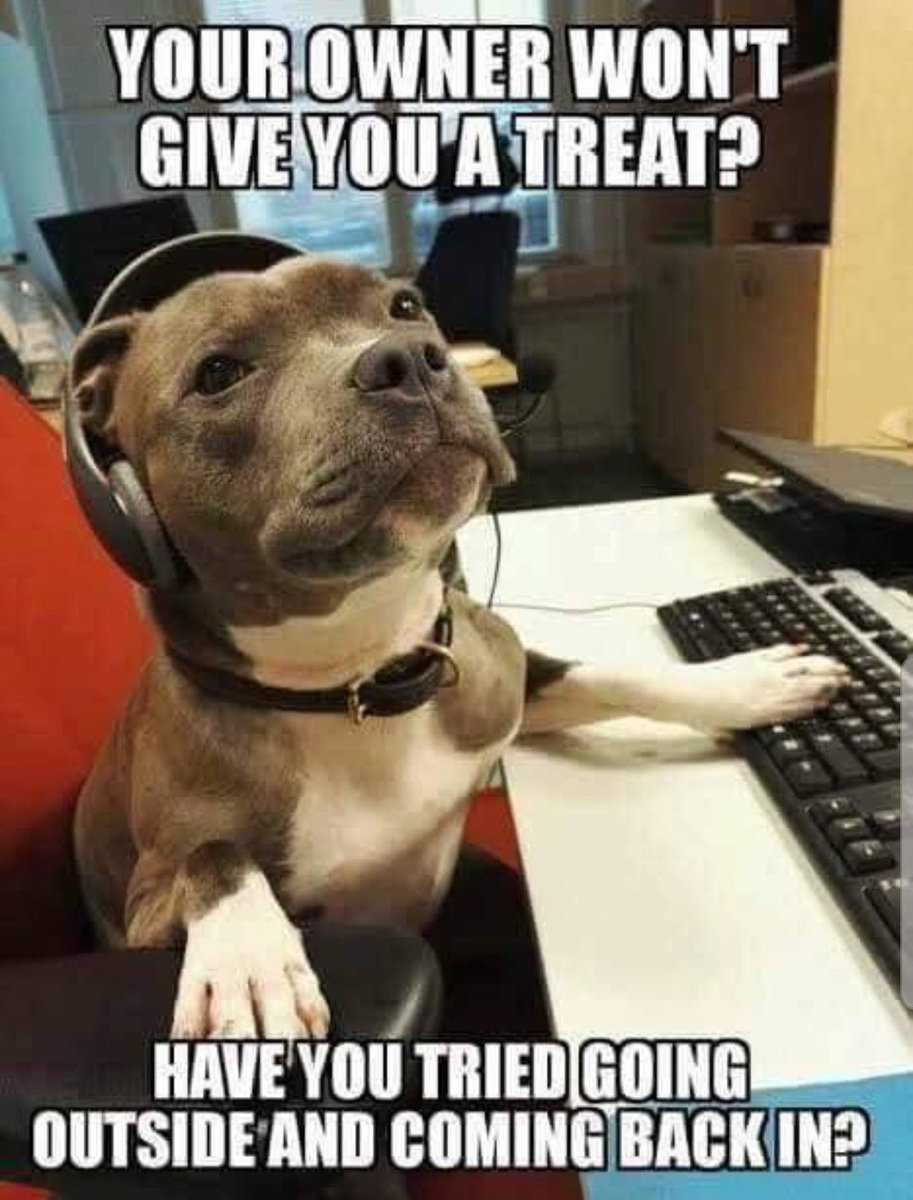 Silly canine, we all know the best approach is to stand IN the open doorway, neither in nor out. This is why canine tech support is useless. <br>http://pic.twitter.com/DXlfxm8ThG