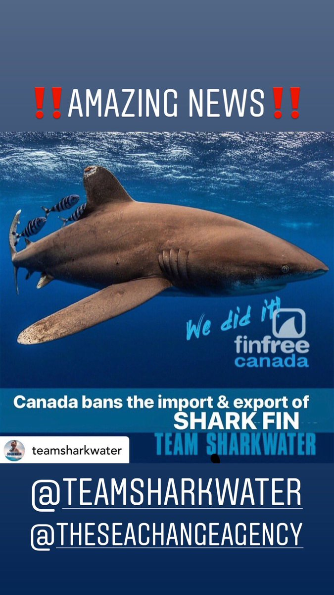 WOOHOOO!!! YES!!! AMAZING NEWS!!! @theseachangeagency @TeamSharkwater We did it! Canada just banned the import & export of shark fins! Rob Stewart dreamed of a #finfree Canada and it came true!!! Woohoo!!! https://www.instagram.com/p/By3RWIuhF4S/?igshid=1l9tf434pwoa6 …pic.twitter.com/S90Ll5gGur