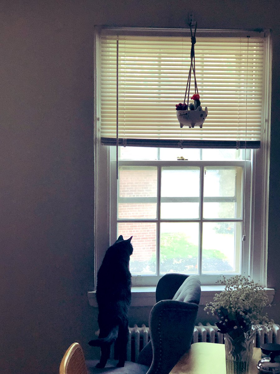 Today I discovered the windows of my new home. #CatsOfTwitter #blackcat<br>http://pic.twitter.com/99NImIXYvn