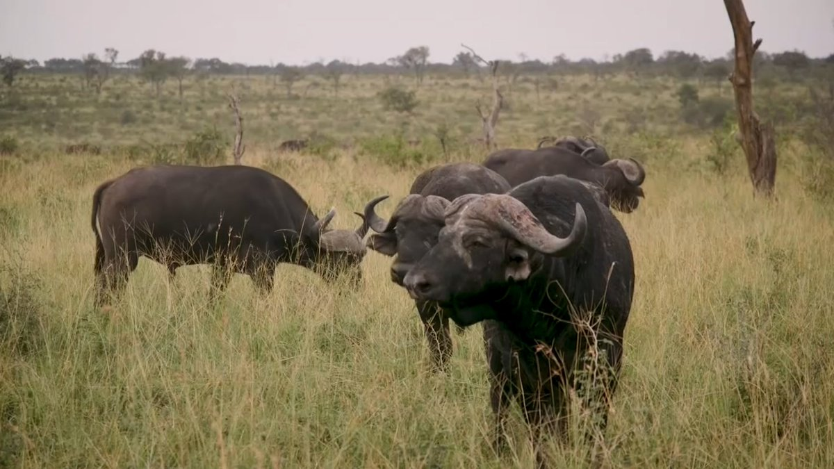 Game farming brings big business to South Africa https://reut.rs/2Xh2IHd