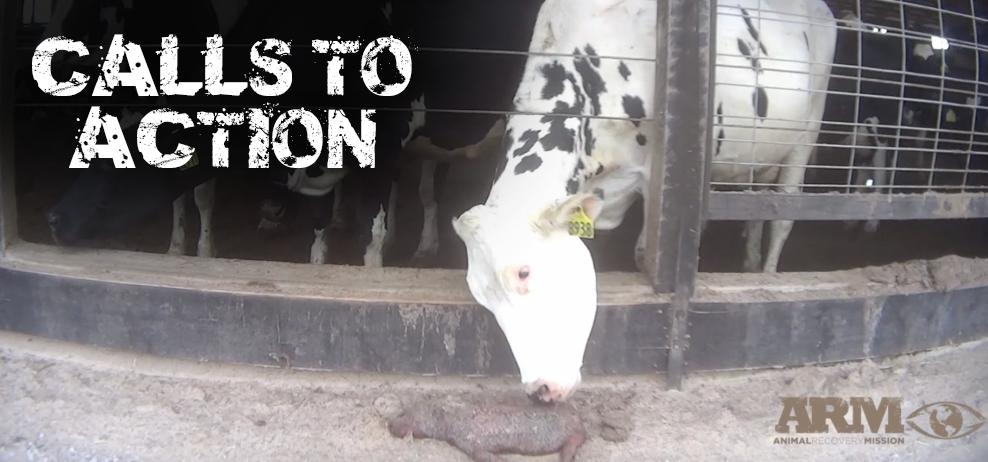 #calltoaction #CTA : Help spread the word of #animalrights #animalwelfare and the rights of #consumers.  #saynotodairy #ditchdairy #boycottfairlife #boycottcoca-cola #boycottchickfila #ChickFilA<br>http://pic.twitter.com/LN90aUVqny
