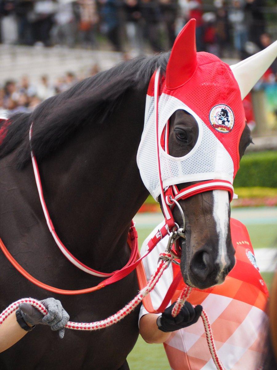 牡馬顔負けの現役屈指の切れ者リスグラシュー!金鯱賞ではダノンプレミアムを、前走の香港でもウインブライトなど牡馬相手に自慢の決め手勝負で肉薄。スイープトウショウを彷彿させるような終い勝負で牡馬陣を一気に撫で切るシーンがイメージできそう。 #リスグラシュー #ダミアン・レーン #宝塚記念