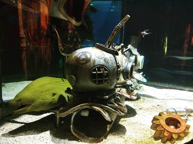 Creeper Eel  #eel #eelsofinstagram #sea #sealife #aquarium #steampunk