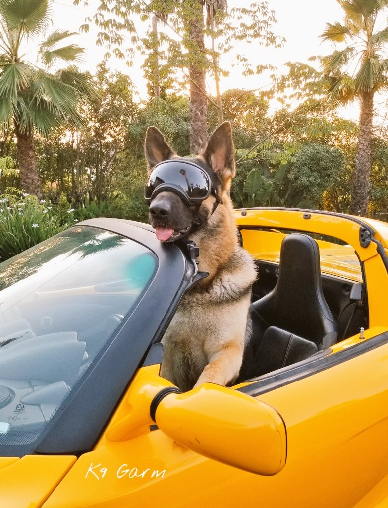 This thing corners like its on rails!   #FaMoose #K9Garm #SARK9 #dogsoftwitter #dog #dogs #germanshepherd #gsd #moosedog<br>http://pic.twitter.com/ubGm62DhC0