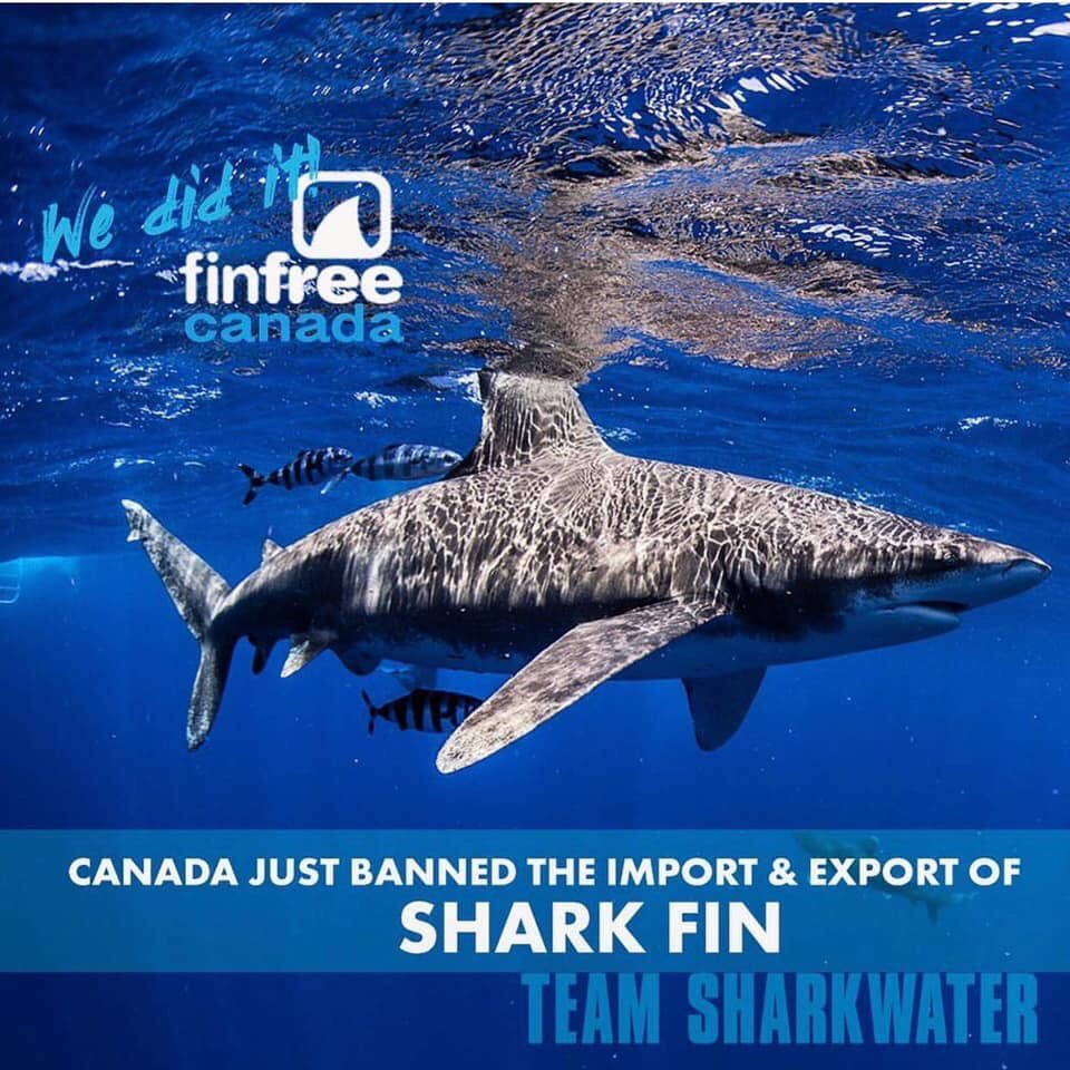 Tonight Canada banned the import and export of shark fins with passage of Bill C-68.  We can thank conservationist and filmmaker Rob Stewart, whose passion for sharks and our marine environment was the driving force behind #FinFree And thanks Wendy for always pushing me on this! pic.twitter.com/oS7vko7sSo