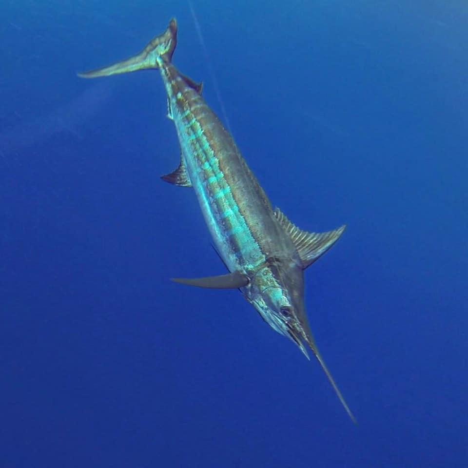 Los Suenos, CR - Hooker went 11-14 on Blue Marlin.