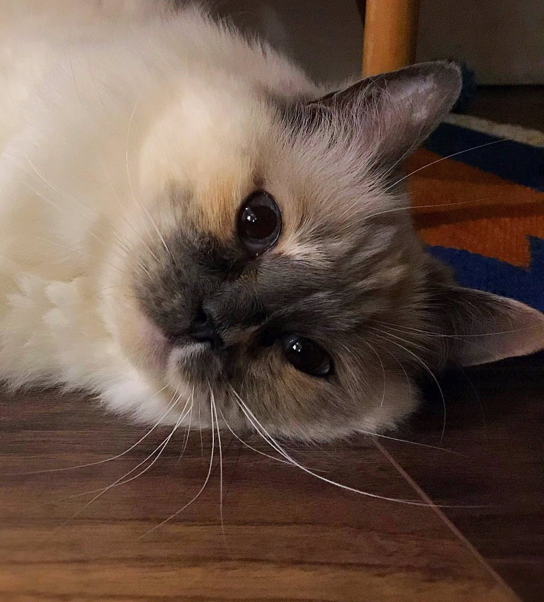 When will it ever stop raining?! ☔️🙀☔️ Another indoor sports day - nefur mind...keep going! 🌈😻🌈#whiskerswednesday #WednesdayWisdom