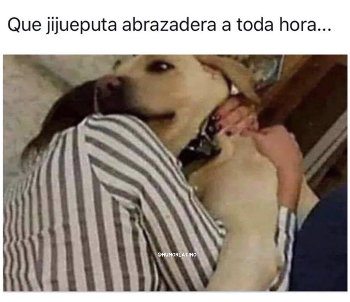 Cualquier perro en mi vida