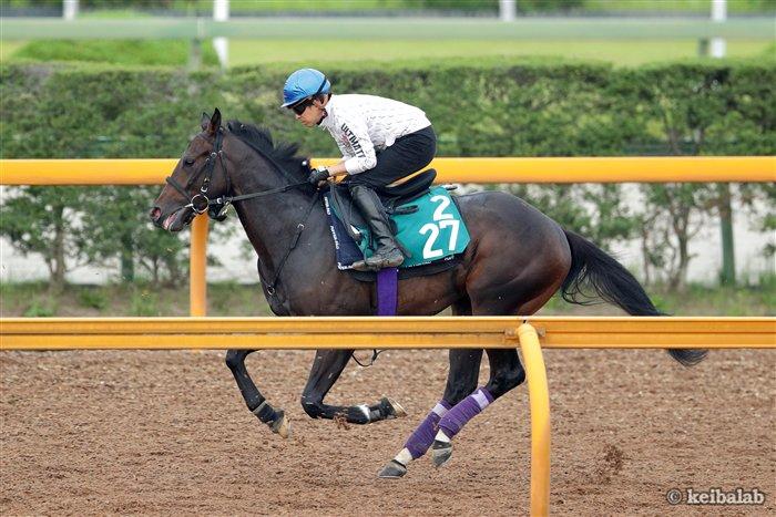 【ディープインパクト×アパパネ】 モクレレ、ジナンボーら関東馬の全兄と異なり、栗東・友道康夫厩舎で管理され、デビューを控えるラインベック。今朝の追い切りには福永祐一騎手が騎乗。 https://t.co/2KPbefzAR4 #競馬 #keiba
