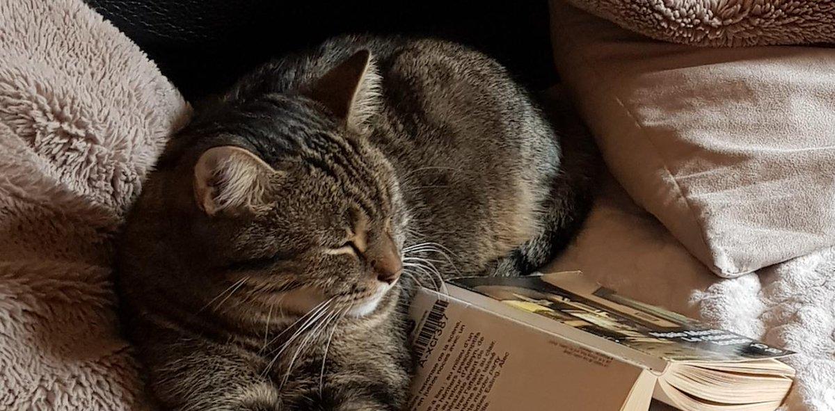 RT @ESSECKnowledge: #livre #Reading Pourquoi les livres papier n'ont ils pas disparu ? On annonçait le succès de la liseuse, mais les lecteurs ne semblent pas partager le même avis... https://buff.ly/2RinO2r