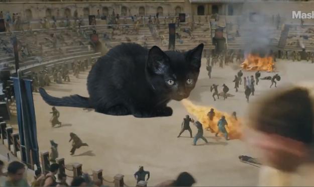 Game Of Thrones spoiler alert........... #got #GOTfinal #gameofthones #crazycatlady #CatsOfTwitter