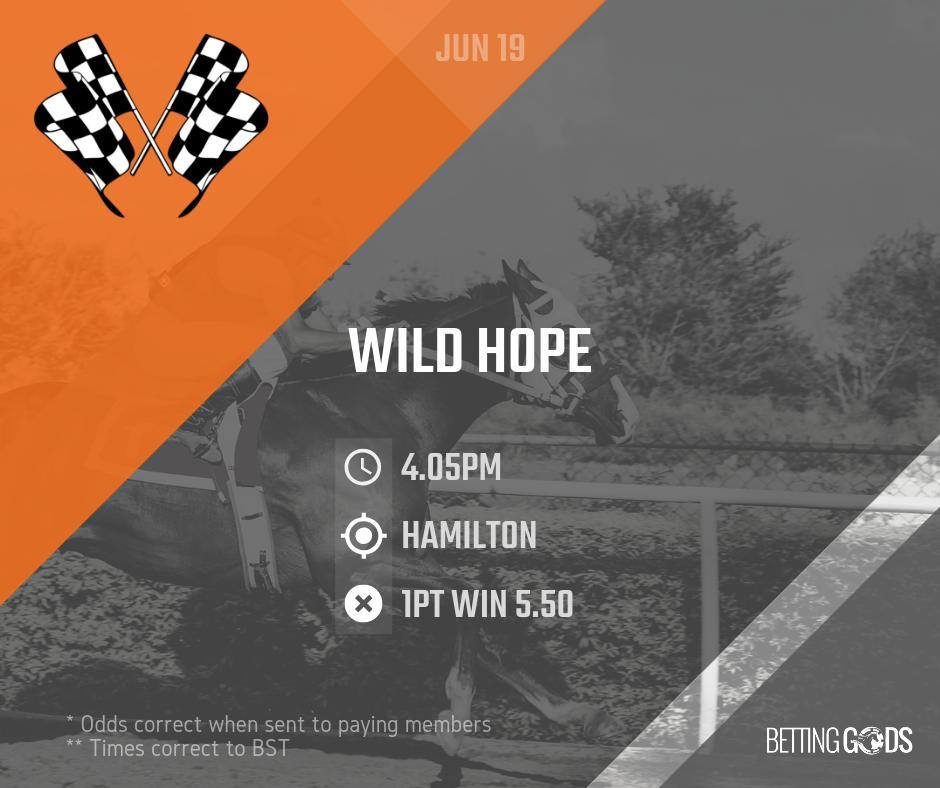June 19:  16:05 (Race 5) Hamilton - Wild Hope  #wildhope #hamilton #horseracing #racingtips #racing #betting #bettinggods #bettingexpert #bettingadvice #bet #winner #odds