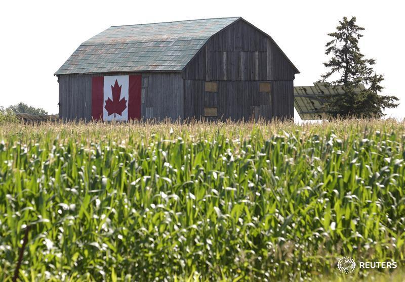 China snub, drought and debt shake finances of Canada's farmers https://reut.rs/2XZ2lhm by @RodNickel_Rtrs @johnsonthree