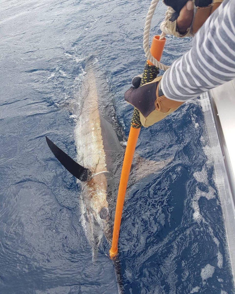 Havanna, Vanuatu - Capt. Russ Housby on Nambas went 2-2 on Blue Marlin.
