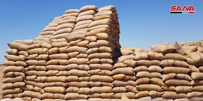 #SYRIA: In spite of the terrorist war on wheat harvest, the Mministry of Agriculture confirms receiving 248.000 tons of wheat from the farmers so far, almost double the quantity recieved the same period last year. #SyriaNow
