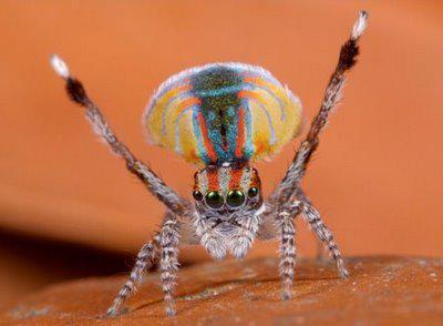 Spiders Looking Cute -  https:// viraljar.com/site/post/849    <br>http://pic.twitter.com/yLZaXsedFw
