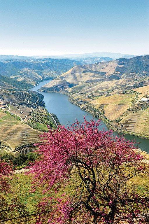 #worldofcruising #uk #Douro #wine #valley #unesco #Portugal #rivercruise #tourism #holidays #vacation #AvalonWaterways #CroisiEurope #VikingCruises #destination #winery #winetasting #cruising #cruise #Europe #art #museum #culture #rivercruises  https://www.worldofcruising.co.uk/shearingscomp/