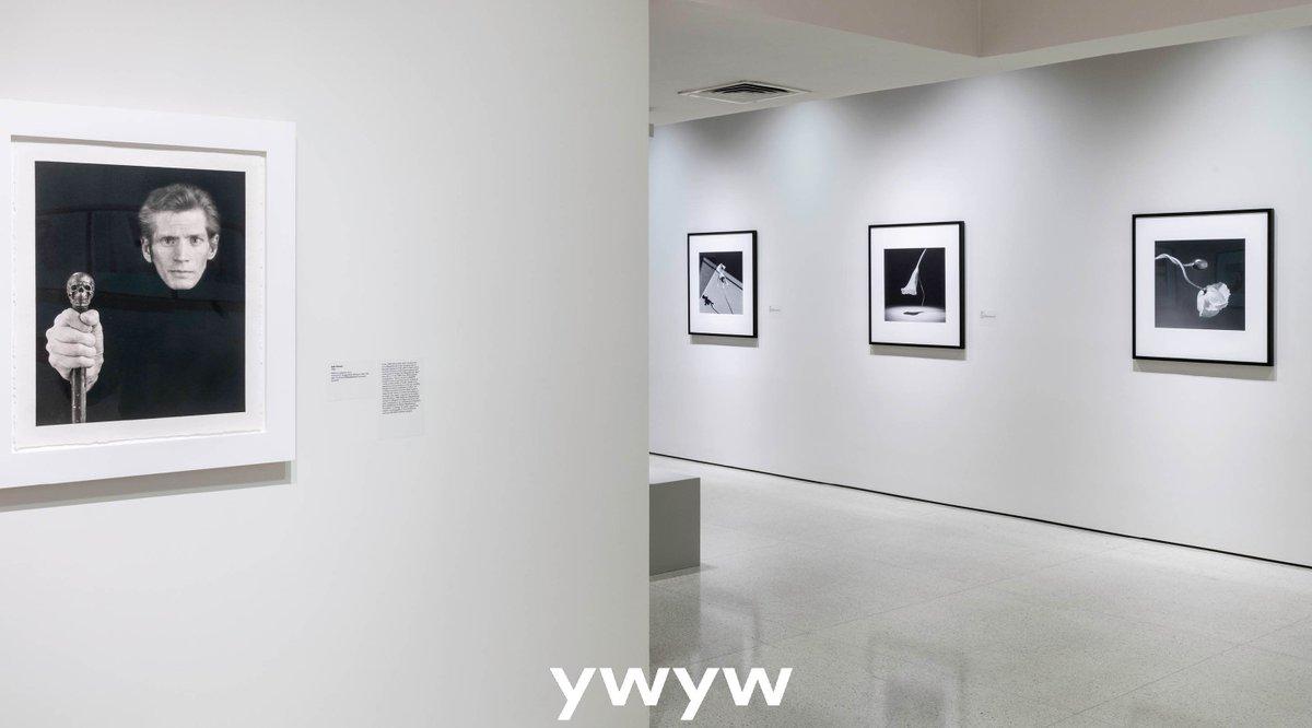 http://www.ywywmagazine.com/2019/06/10/implicit-tensions-mapplethorpe-now/… #ywywmagazine #ywyw #exhibit @Guggenheim #guggenheim #mapplethorpe #vintage #photography #selfportrait
