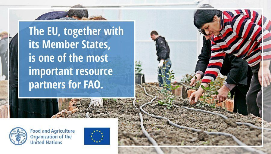 Since 1991, @europeaid 🇪🇺 and @FAO have collaborated through countless programmes in Africa, Asia, Europe, the Near East and Latin America.  Our joint achievements have been significant ➡️ http://bit.ly/31FFl9y   #EDD19 #EDD2019 #ZeroHunger
