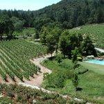 Image for the Tweet beginning: Napa Valley pioneer Diamond Creek