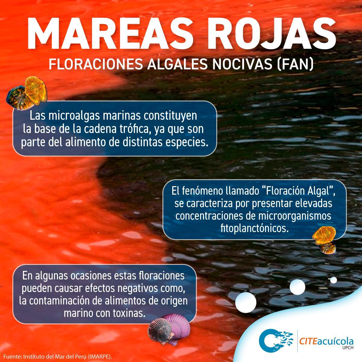 ¿Sabías qué?🧠 Las mareas rojas o Floraciones Algales Nocivas, son discoloraciones del agua del mar causadas por elevadas concentraciones de microorganismos fitoplanctónicos pigmentados. #CITEacuícolaUPCH #CITE #PRODUCE #MinProducción #mar #eco #FAN #Peru #ocean #sea #naturale