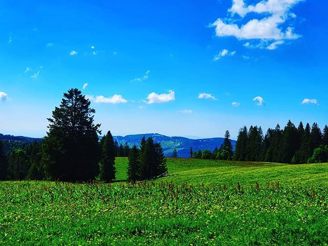 #sky #naturalLandscape #meadow #nature #grassland #naturalEnvironment #pasture #mountainousLandforms #green #mountain #wilderness #grass #tree #mountainRange #field #cloud #daytime #alps #biome #hill #landLot #spring #hillStation #wildflower #prairie #fo… https://www.instagram.com/p/By5pMEFIQGG/