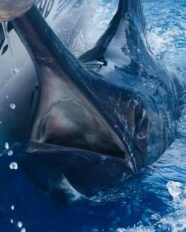 Cape Verdes - Hemingway went 2-2 on Blue Marlin (750,650).