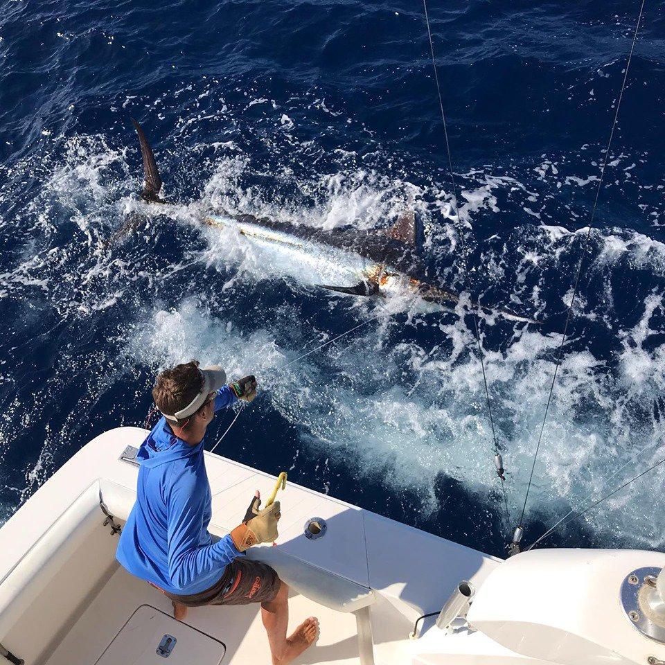 La Gomera - Noalex released a Blue Marlin.